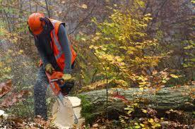 timber_woods